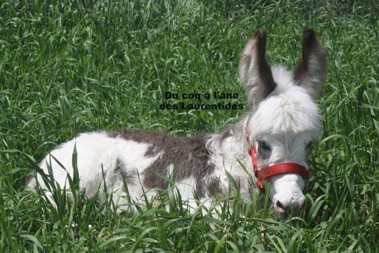 bébé âne dans la longue herbe